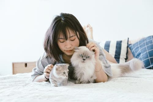 Pets Definition-Guide To Choose Best One