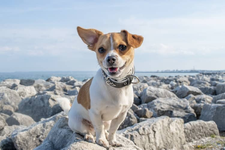 Pets Insurance - Tips For You To Choose The Right Plan