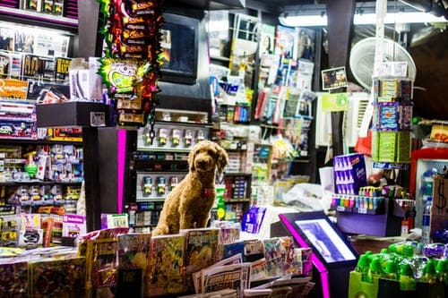 Specialty And The Availability Of Resources In The Pets Market