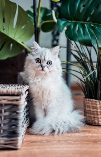 Pets Are Next To Our Family: Must Know Things