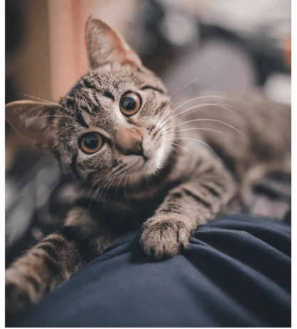 Nail Clipping And Nail Care For Cats