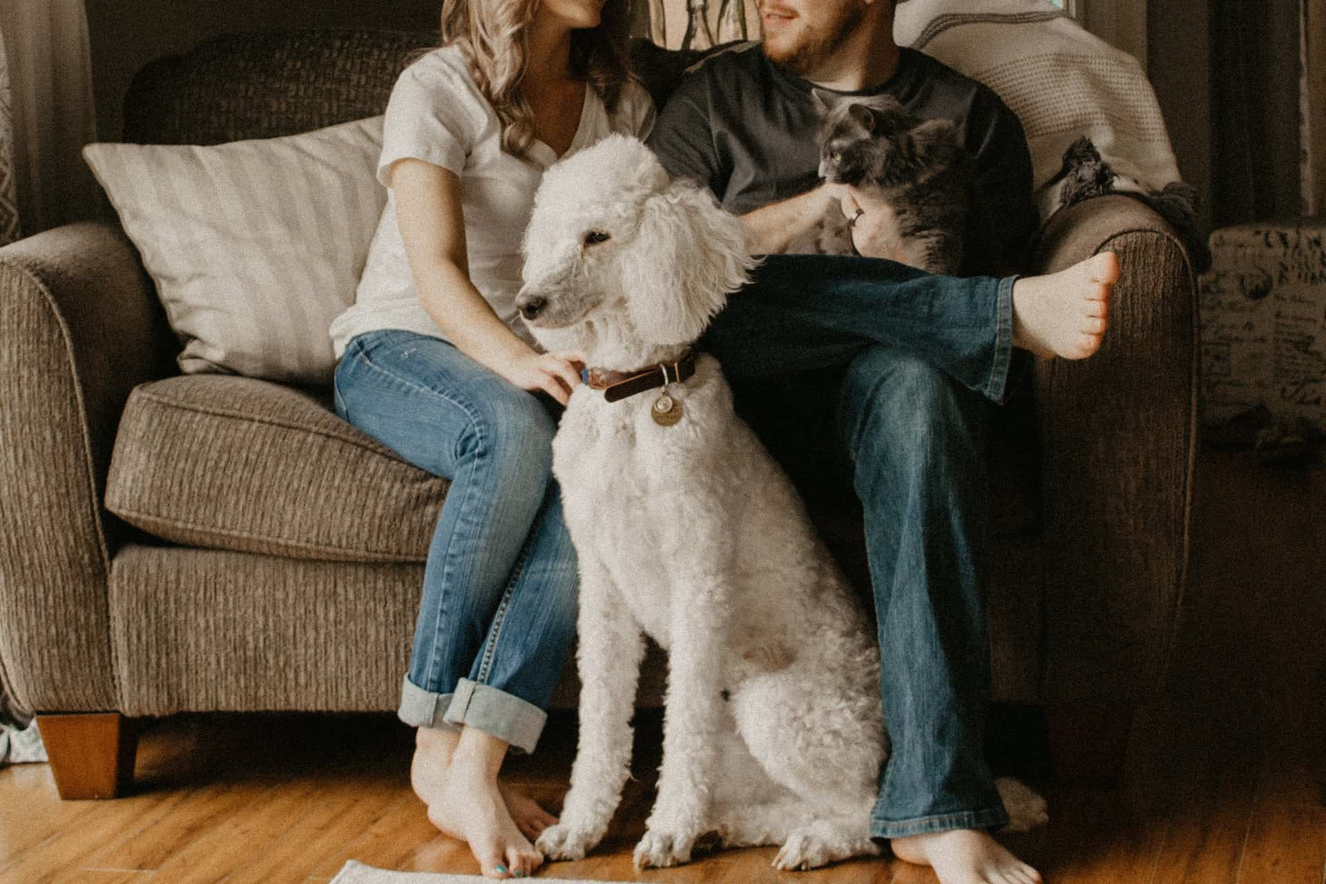 Few Reasons Why Pets Are Important To Humans