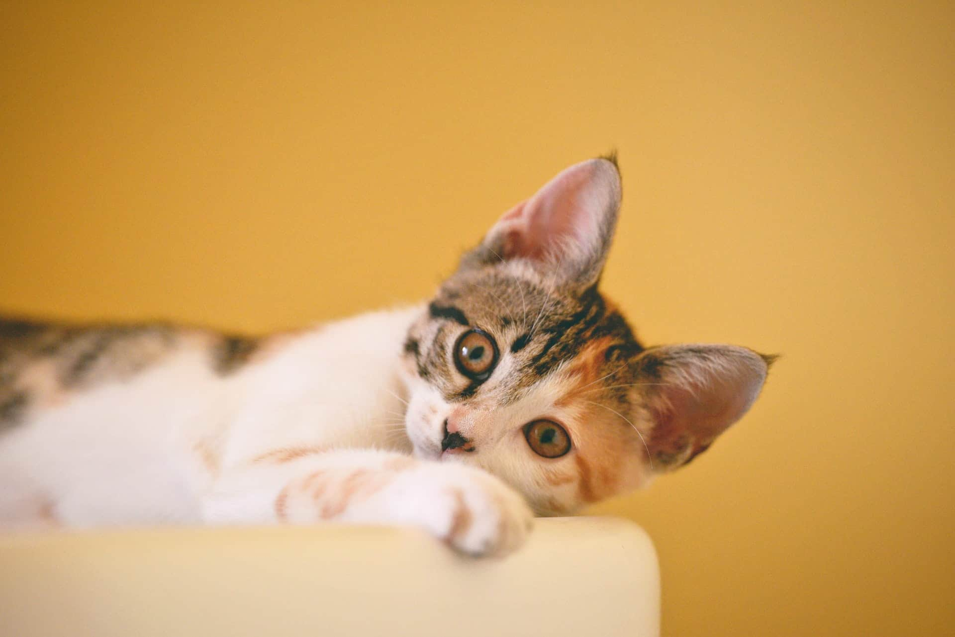The Secret Of Pets - How To Keep Your Pet Healthy