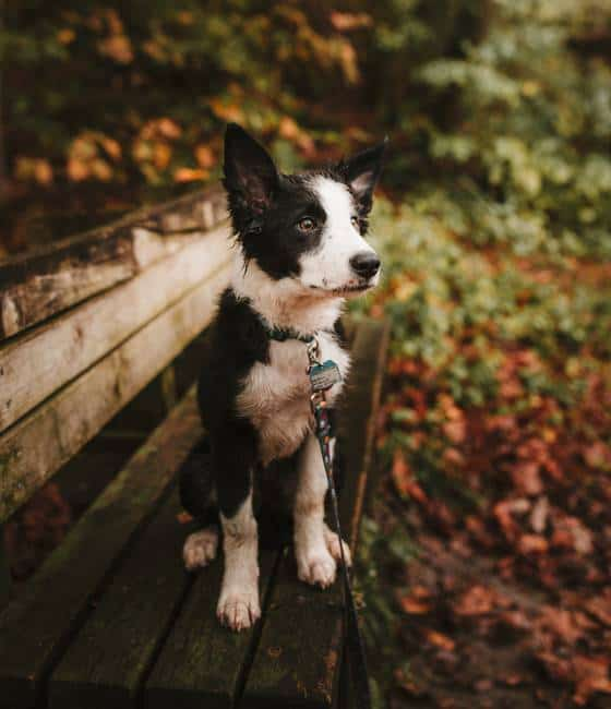 Why You Should Consider Getting A Dog Leash Holder