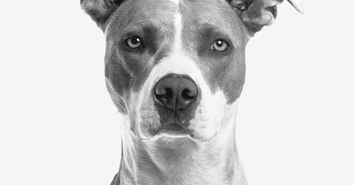 A close up of a dog head posing for the camera